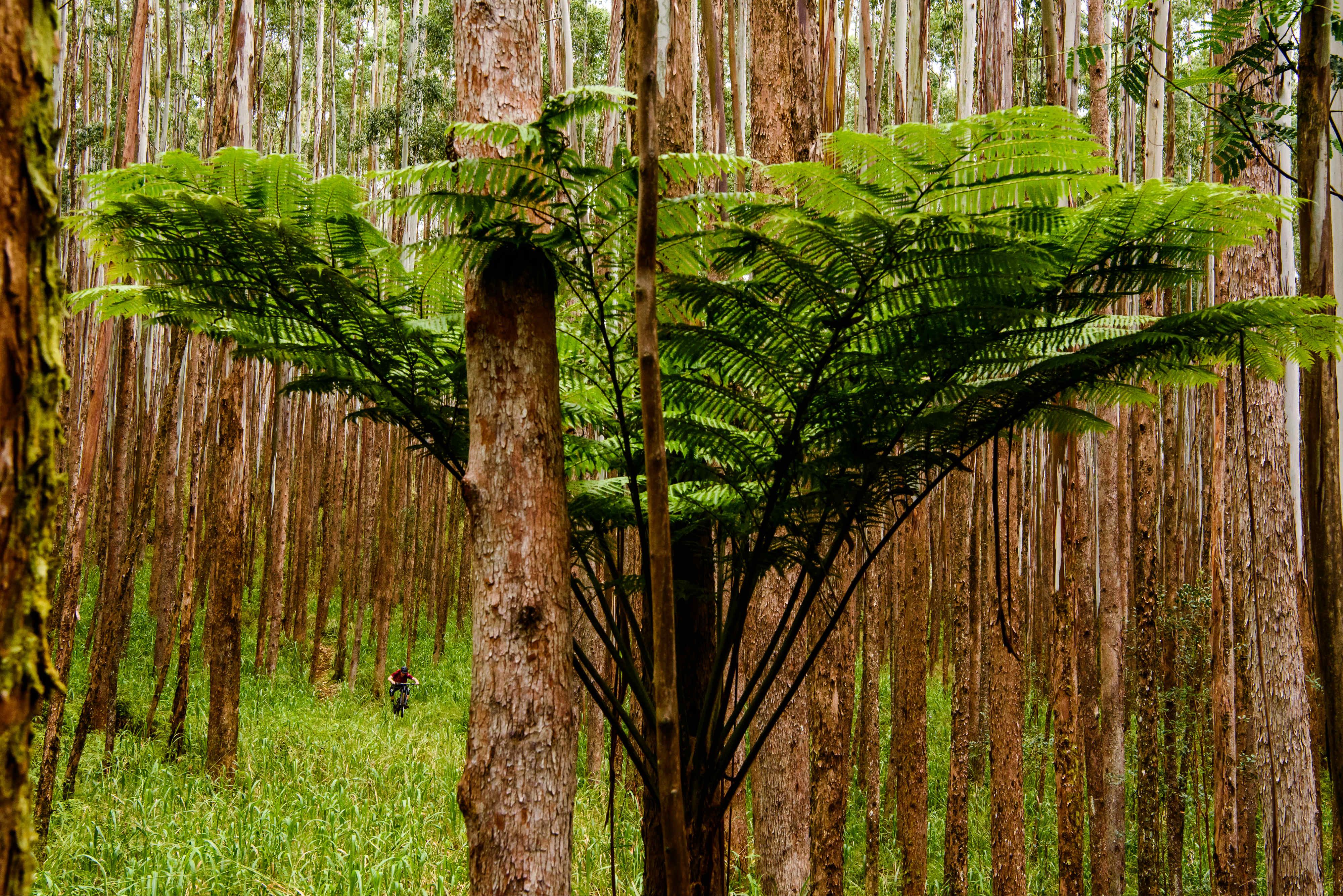 big trees, big ideas